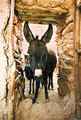 MAM 14 MH0001 01
