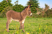 MAM 14 SJ0011 01