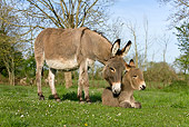 MAM 14 KH0017 01