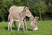 MAM 14 KH0020 01