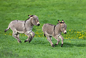 MAM 14 KH0025 01