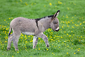 MAM 14 KH0029 01