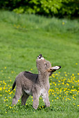 MAM 14 KH0032 01