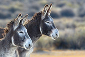 MAM 14 KH0040 01