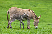 MAM 14 KH0042 01