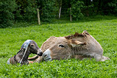 MAM 14 KH0044 01