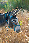 MAM 14 KH0049 01
