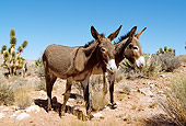 MAM 14 LS0006 01