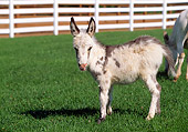 MAM 14 LS0013 01