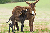 MAM 14 MB0001 01