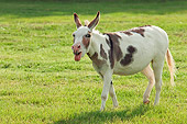 MAM 14 MB0002 01