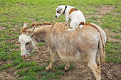 MAM 14 MB0006 01