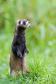 MAM 15 AC0009 01