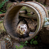 MAM 15 KH0103 01