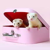 MAM 15 XA0005 01