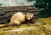 MAM 15 FA0001 01
