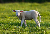 MAM 16 KH0001 01