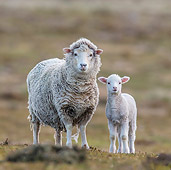 MAM 16 KH0033 01