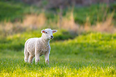 MAM 16 KH0043 01