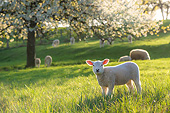 MAM 16 KH0046 01