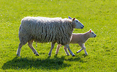 MAM 16 KH0047 01