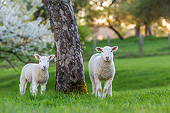 MAM 16 KH0048 01