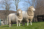 MAM 16 LS0004 01