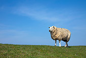 MAM 16 WF0001 01