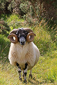 MAM 16 WF0004 01