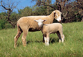 MAM 16 LS0001 01