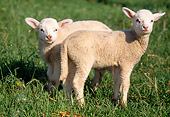 MAM 16 LS0003 01