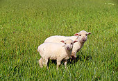 MAM 16 RK0008 11