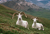 MAM 16 TL0001 01