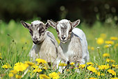 MAM 17 GL0004 01