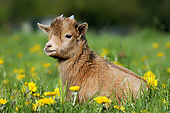 MAM 17 GL0008 01