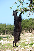 MAM 17 JE0001 01