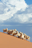 MAM 17 KH0007 01