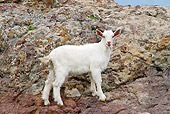 MAM 17 KH0012 01
