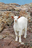 MAM 17 KH0013 01