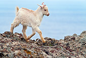MAM 17 KH0014 01