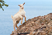 MAM 17 KH0015 01