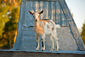 MAM 17 KH0017 01