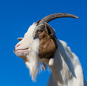 MAM 17 KH0022 01