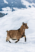 MAM 17 KH0025 01