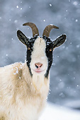 MAM 17 KH0028 01