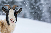 MAM 17 KH0029 01