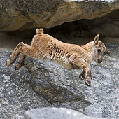 MAM 17 KH0030 01