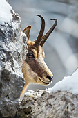 MAM 17 KH0032 01