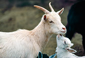 MAM 17 RK0004 01