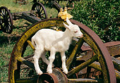 MAM 17 RK0018 14